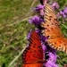 Purple Butterfly gallerythumb